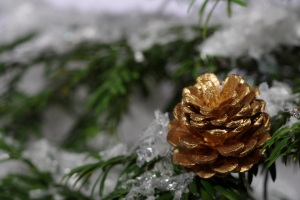 4golden-cone-on-tree-1434449-m