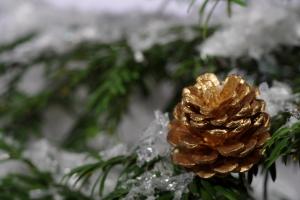 4golden-cone-on-tree-1434449-m