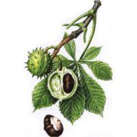 Каштан конский плоды 50 гр.